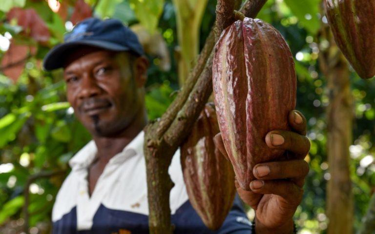 CookieLabs met l'IA au service des producteurs de cacao en Côte d'Ivoire